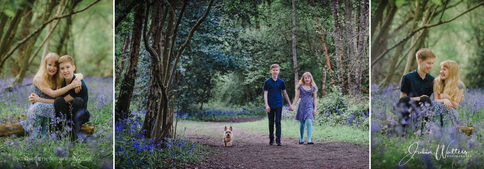 woodland bluebell location photography